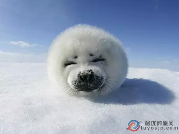 地球上最萌动物排行榜:大熊猫仅第三